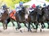 UPSTART The Razorback Handicap Gr III - 57th Running Oaklawn Park     Hot Springs, Arkansas March 19, 2016    Race #08 Purse $350,000 1-1/16 Miles  1:44.12 Ralph M. Evans & WinStar Farm LLC, Owner Richard A. Violette, Jr., Trainer Joe Bravo, Jockey Domain\'s Rap (2nd) Idolo Porteno (3rd) $7.20  $4.80  $4.40 Order of Finish - 7, 8, 5, 4 Please Give Photo Credit To:  Coady Photography