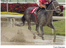 Pants On Fire may get crack at Gulfstream Handicap